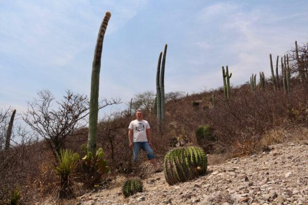 Мексиканские кактусы.