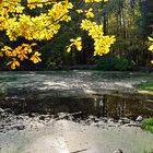 Прощание смосковской осенью.
