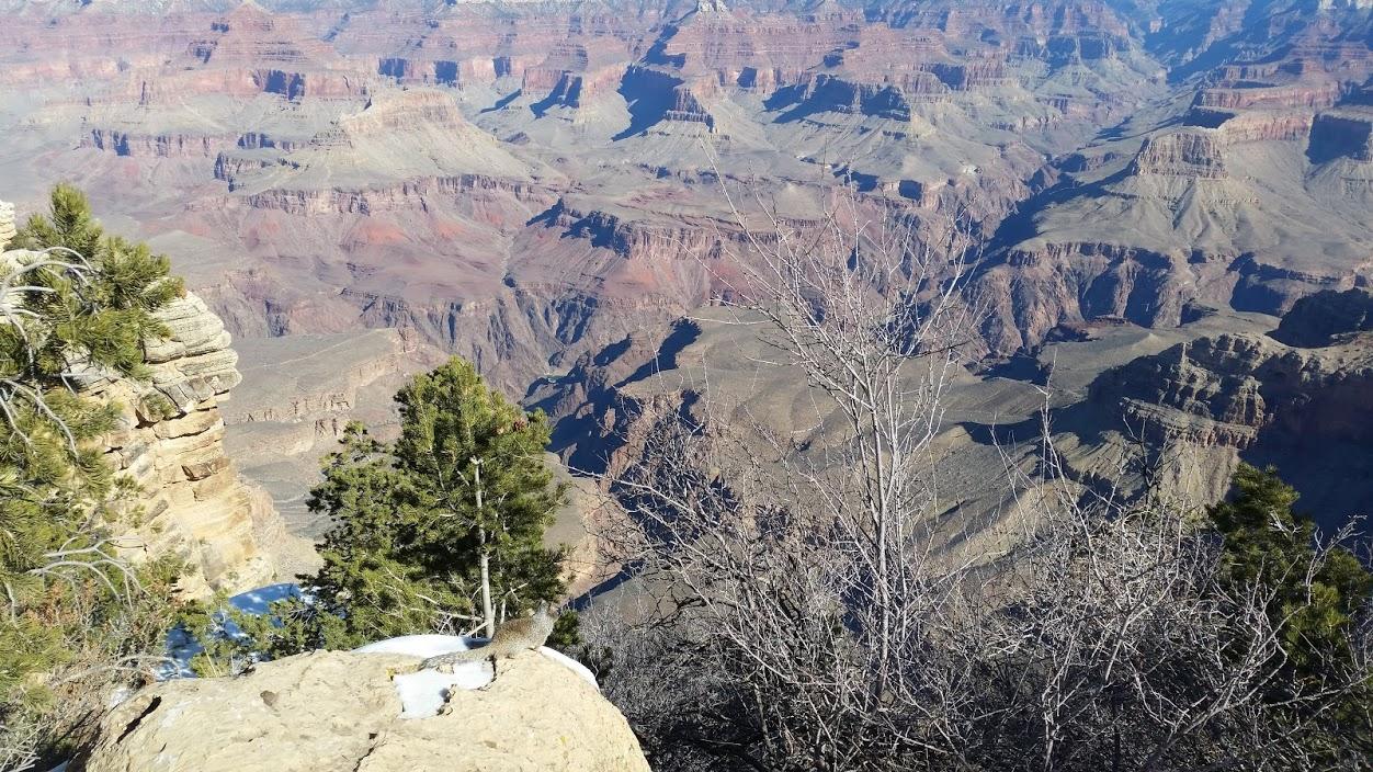Белке тоже нравится смотреть на каньон