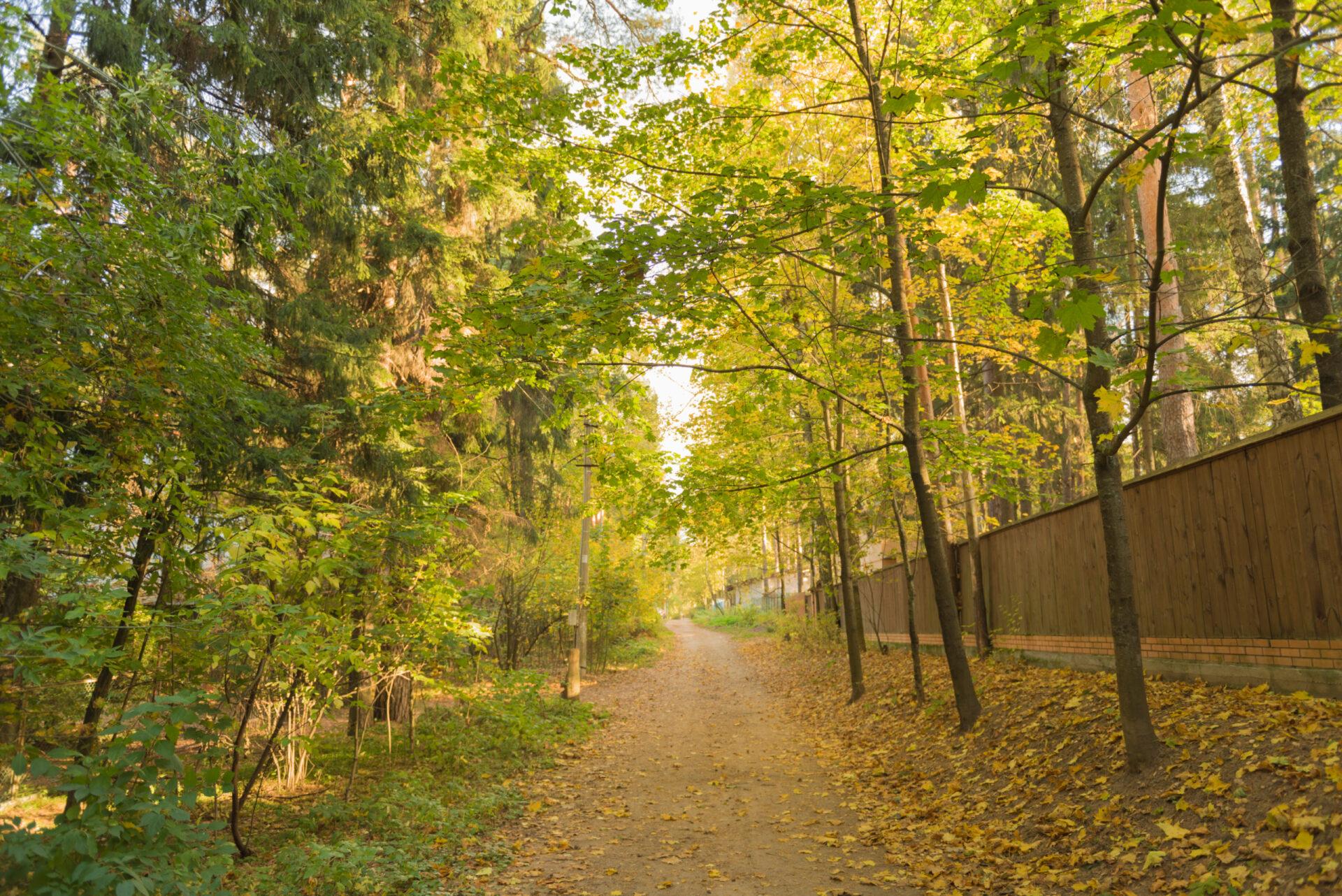 Золотая осень вПодмосковье через новый объектив.