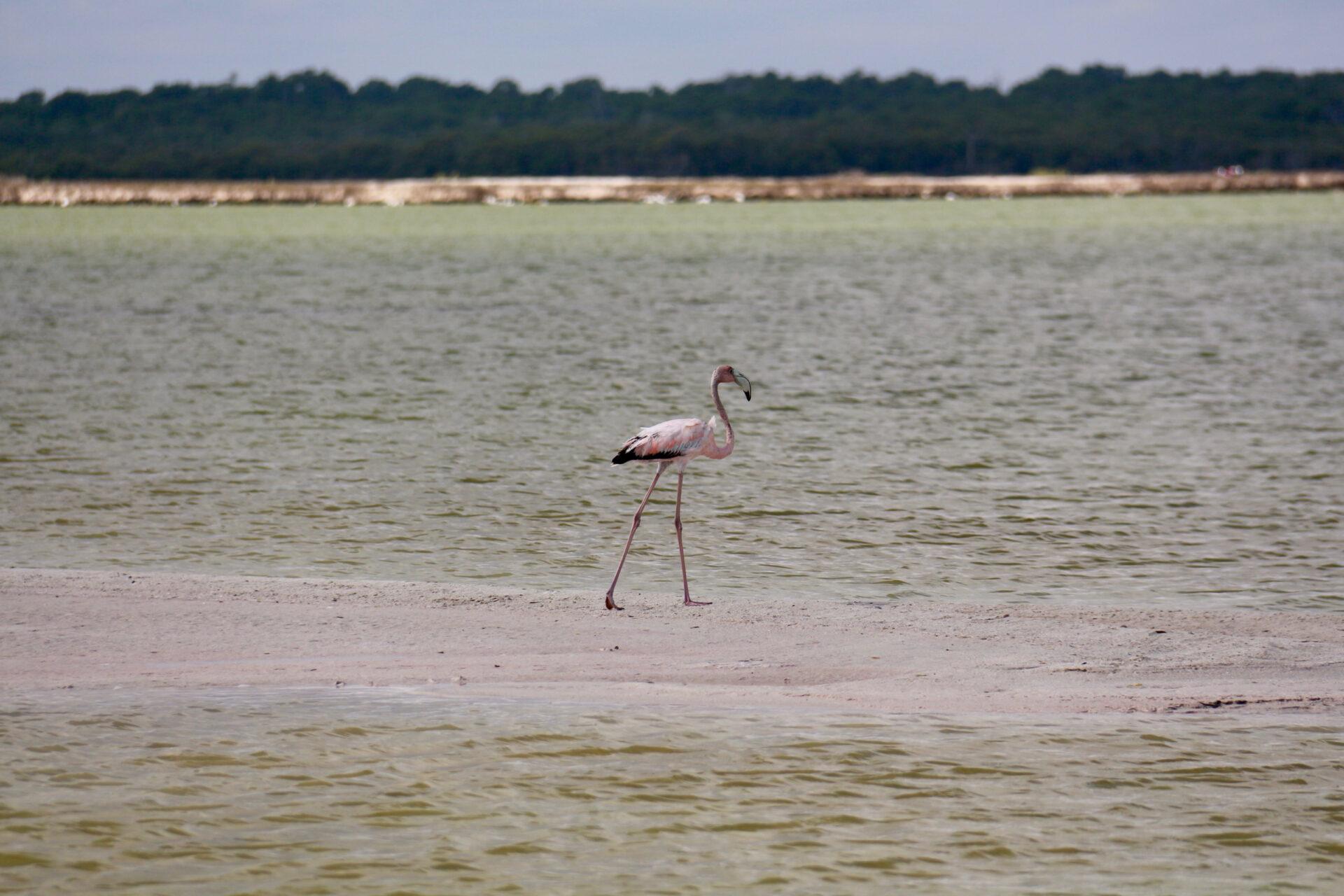 Мексиканский залив ифламинго.