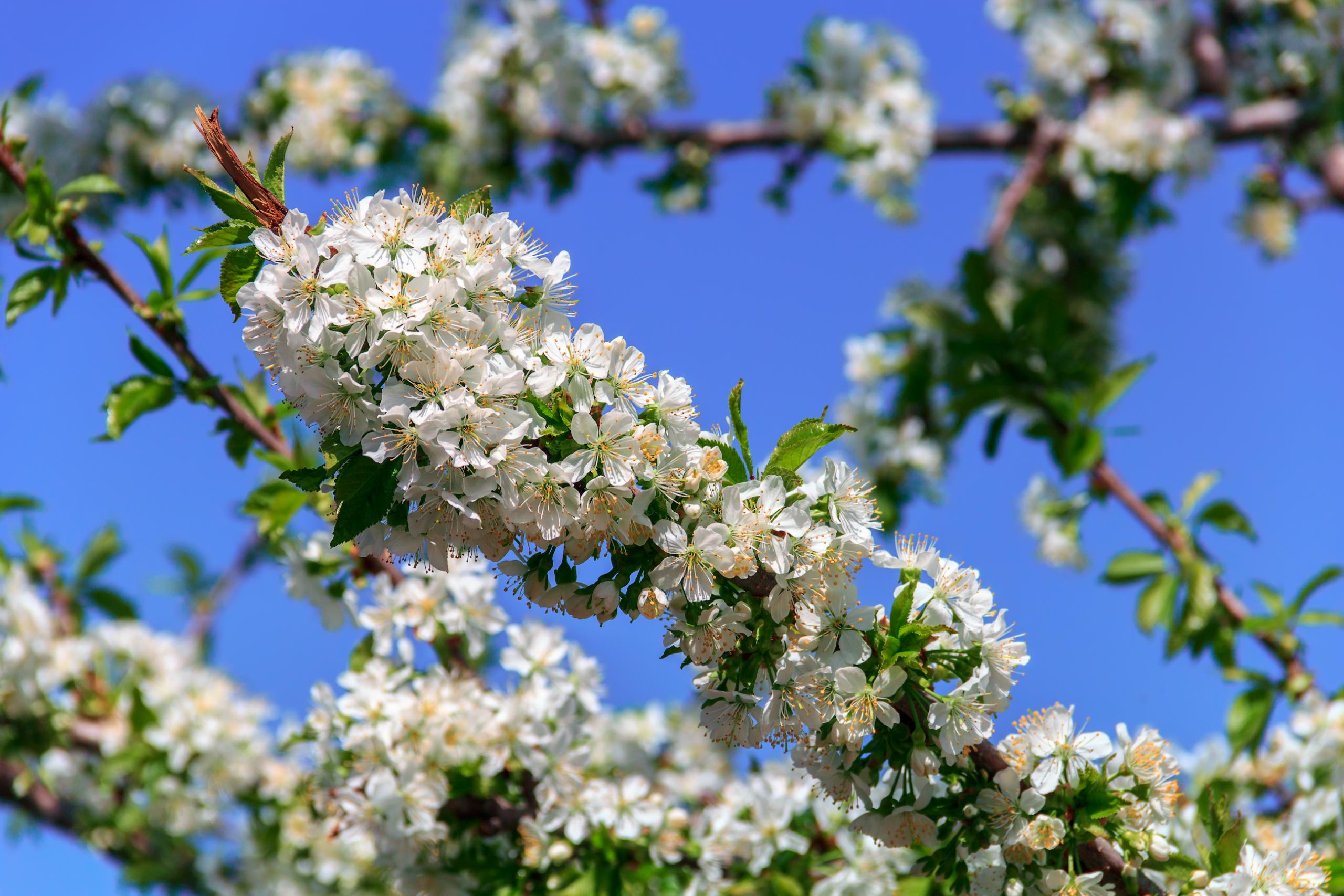 Тем неменее, весна…
